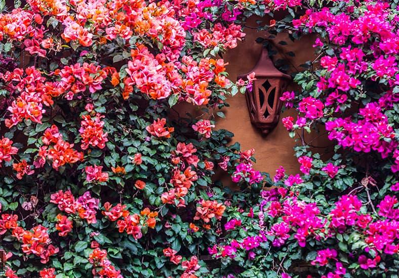 hotel-en-patzcuaro-flores